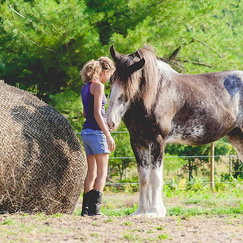 Equine Assisted Psychotherapy (Eagala)