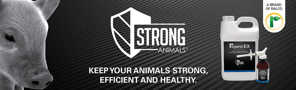 StrongAnimals-Ad-Swine.jpg