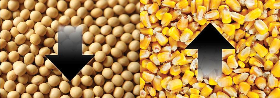 Soybean-Corn-Arrow-Graphic-NoText3.jpg