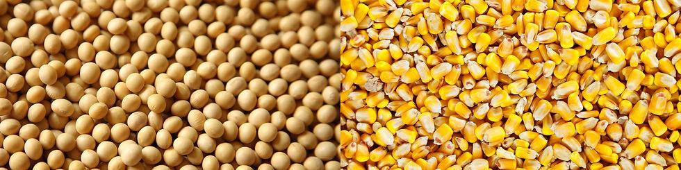 Soybean-Corn.jpg