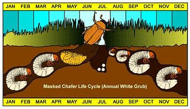 AUGUST - TIME TO ATTACK GRUBS