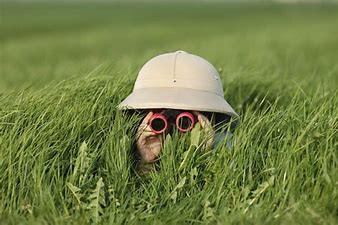 Identifying Lawn Problems
