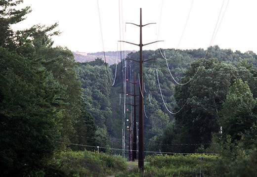 Electric Power Lines through Trees