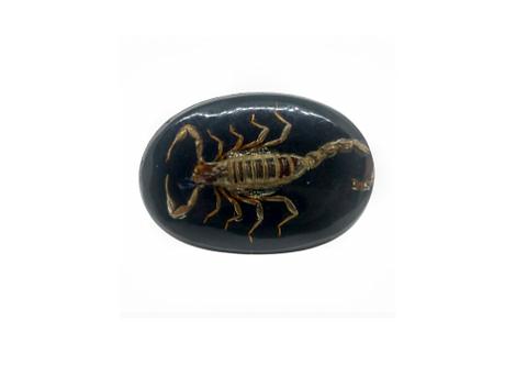 Scorpion | Buckle