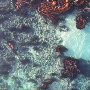 Life in the Shallows