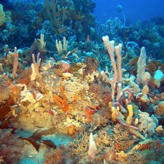 Sponge Garden