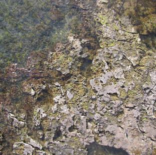 Rocky Reef