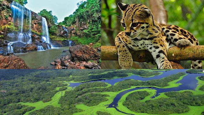 Reiki para tratar florestas Nível III