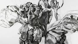 Parot Tulips