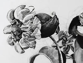 Large Contemporary Botanical Charcoal Drawings
