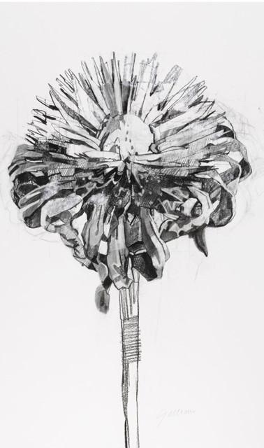 Monarda Seed Head