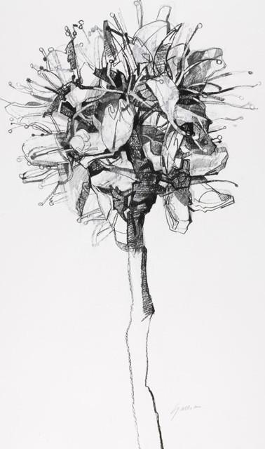 Mayflower Blossom