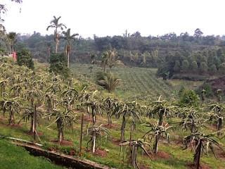 warso farm 3.jpg