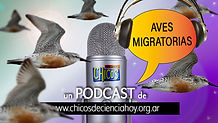 flyer_Podcast_AvesMIgra_16_9.jpg