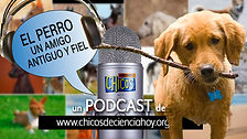 flyer_Podcast_Perros_16_9.jpg