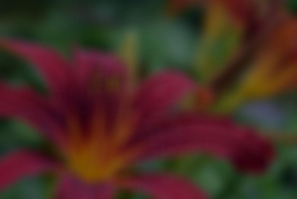 GivingThanks-Aug2021_edited.jpg