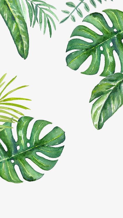 Green Background, Leaf, Greenery, Decora