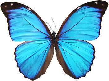 papillon - transformation - massage métamorphique