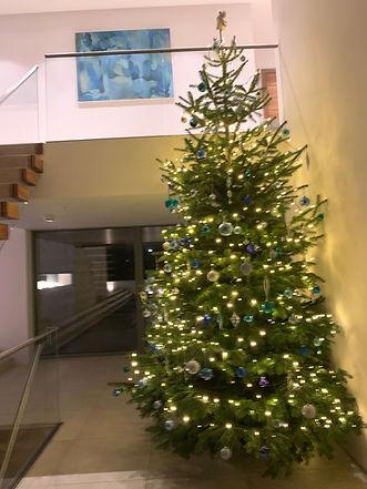 large Christmas trees Nottingham.jpeg