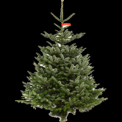 christmas trees nottingham