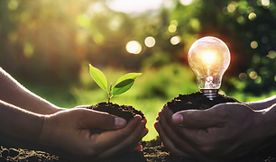 hand-holding-young-plant-with-light-bulb
