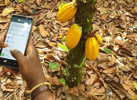 Cocoa traceability tools for farmers and forests
