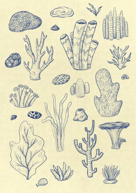 Coral Reef Pattern