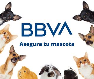 Asegura tus mascotas con el seguro de BBVA