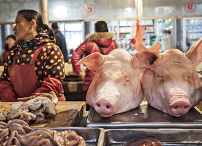 Swine Flu: Who is At A Higher Risk of Contracting It?