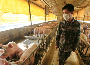 How Safe is The Swine Flu/H1N1 Vaccination?