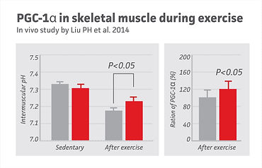 16 PGC-1a in skeletal muscle during exer