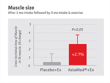 11 3M muscle size.jpg