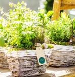 Flower & Plant Labels