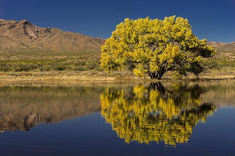 Tree by the Water.jpg