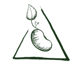 Cult Legume Logo FINAL - Green Icon Only