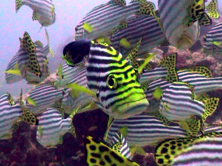 04fish4.jpg