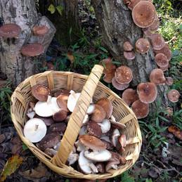 shrooms 6.jpg