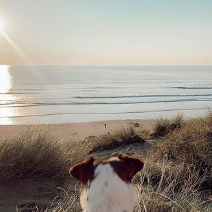 Dog overlooking Woolacombe Beach