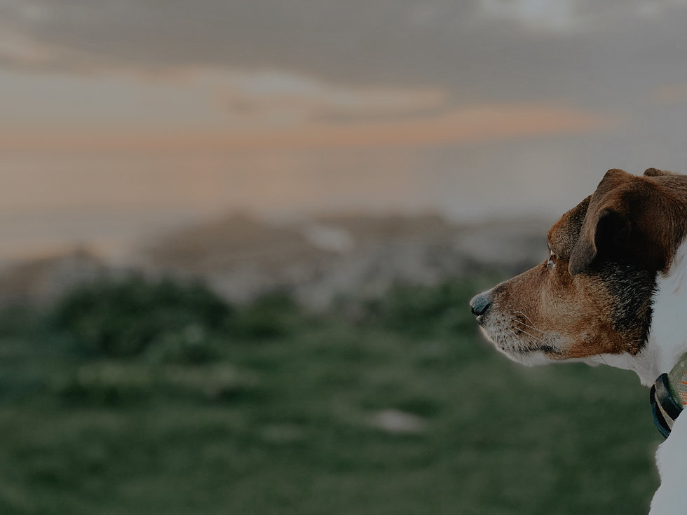 Dog looking out at beach