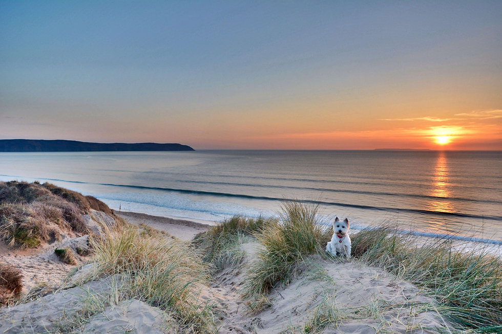 Dog sitting on Woolacombe dunes with sunset over the sea