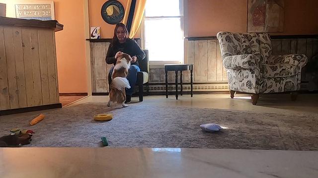 Dogs That Jump: Train An Alternative Behavior