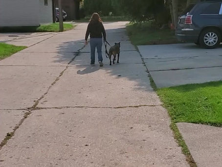 Training A Dog To Walk Nice On Leash