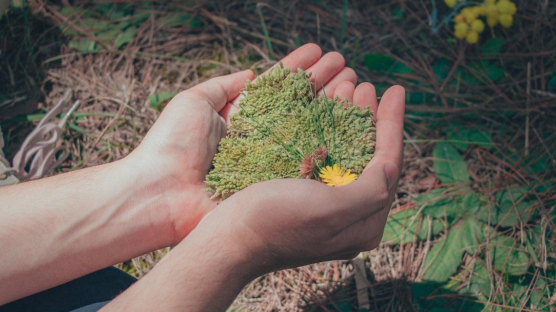 close-up-environment-flora-970594.jpg