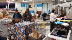 Adoption Day @ Petco