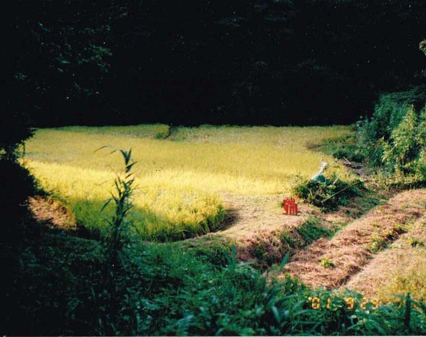 就農した当時の田んぼ