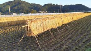 有機農業と自然栽培