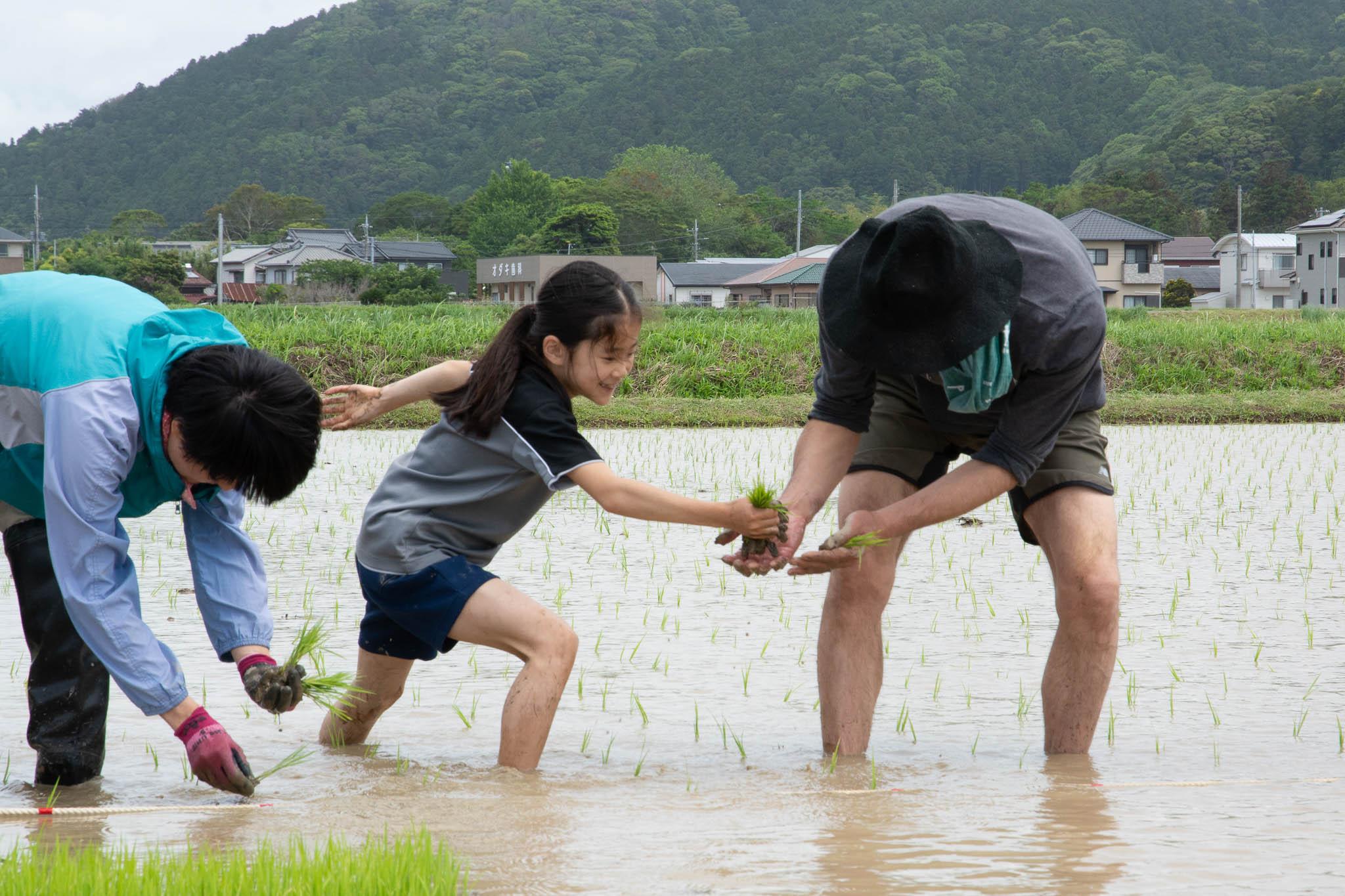 はざ掛け米トラスト 田植え