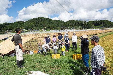 トラスト稲刈り2019の5.jpg