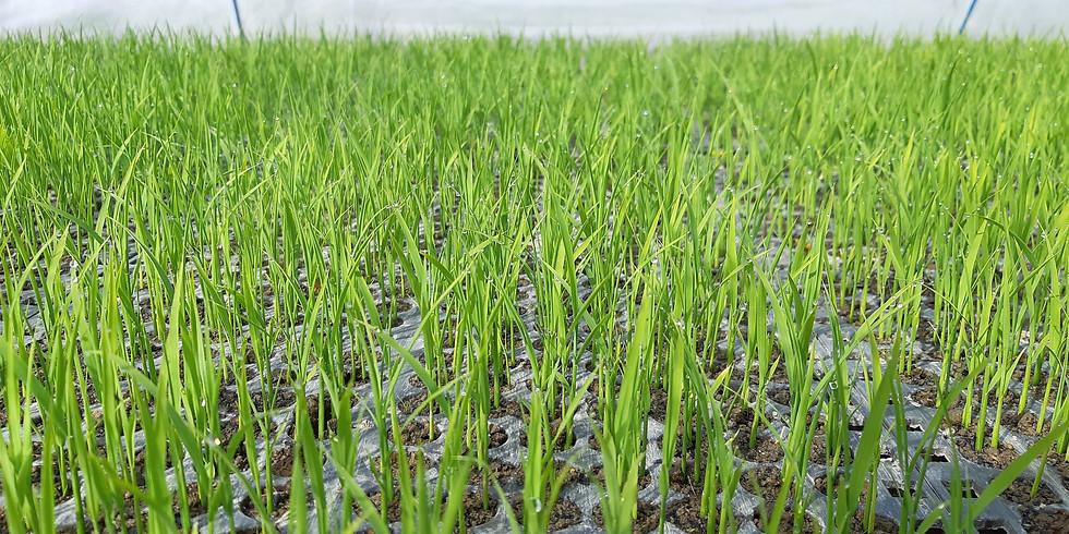 やぎ農園パートナー  4月28日(水)午前の農作業2人募集