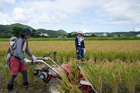 トラスト稲刈り2019の4.jpg